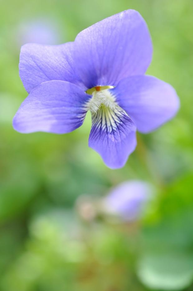 flowers of the park (photo Megan Davis)